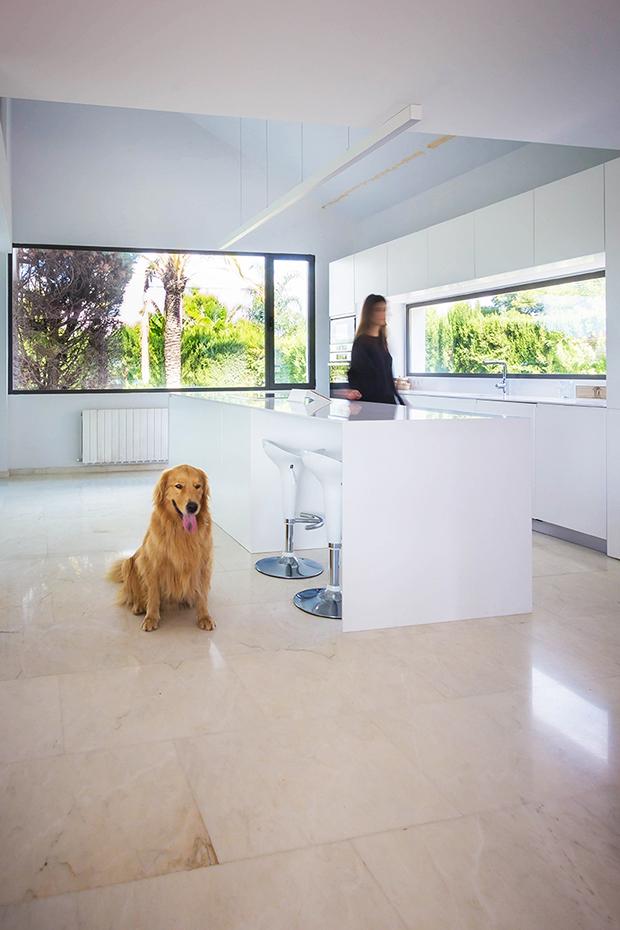 Fotografía de interior. Foto de cocina con perro y persona en movimiento